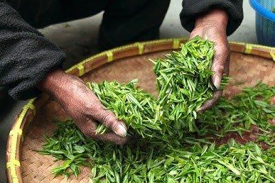 Benefits of Green Tea for Skin and Face Masks